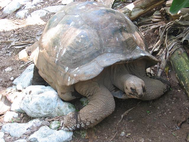 turtle-168877_640