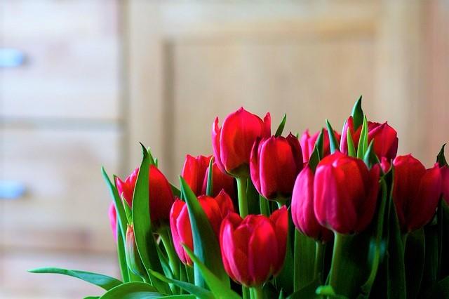 tulips-1036779_640v