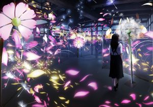 秋桜と蒲公英(コスモスとタンポポ)             展示場所:重要文化財 台所