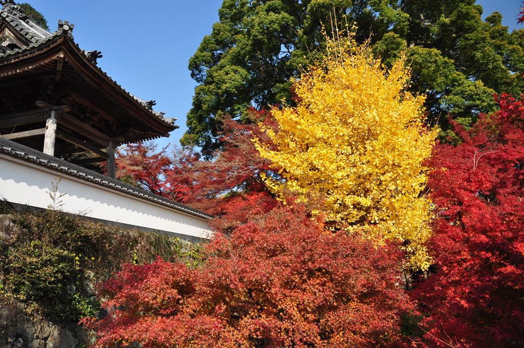大垣円興寺1